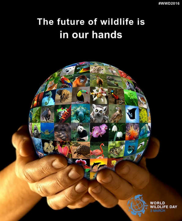 World Wildlife Day logo 2016
