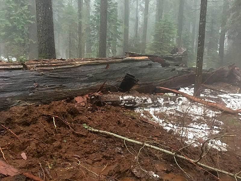 fallen-tunnel-tree