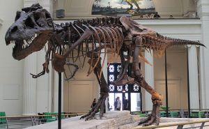 640px-Sues_skeleton